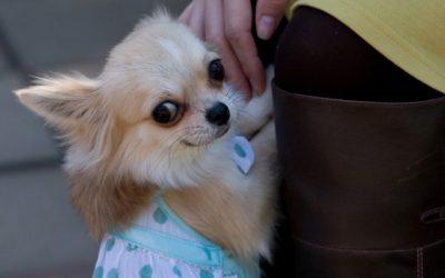 犬にまて・おすわりを教える方法と注意点