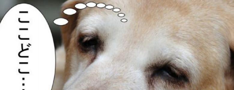 犬との引っ越しは大変?移動や新居での対処術