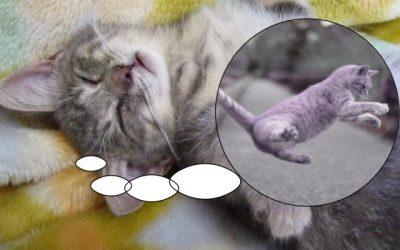 猫を初めて飼うときに気を付けたい事と基礎知識