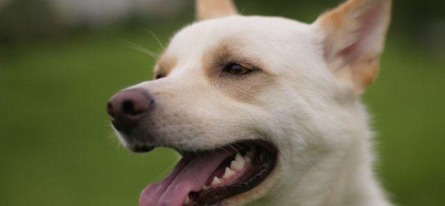 ドッグフードの種類と、犬ごとに合った選び方