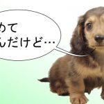 犬を初めて飼う前に知っておきたい情報