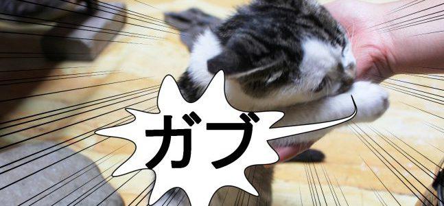 猫の噛み癖つさせない方法。ついた場合もなおす方法