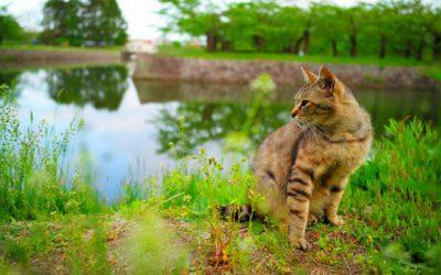 猫を買う・出会いはペットショップ?里親?初心者の選択方法