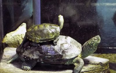 亀の飼育の際に必要なもの