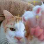 猫の爪とぎのしつけは難しい?部屋を傷つけさせないために出来る事