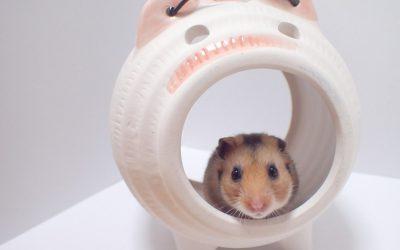 初めてハムスターを飼うときに必要なもの