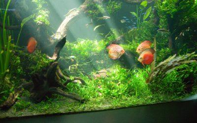水槽で水生生物を初めて飼育するなら何がオススメ?