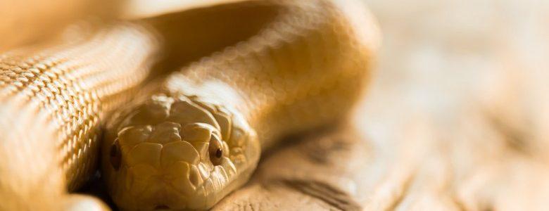 初心者向きの爬虫類のオススメは何?初めてでも飼える爬虫類