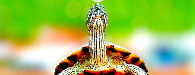 爬虫類を冬眠させる際に覚えておきたい事。春の惨劇を防ごう