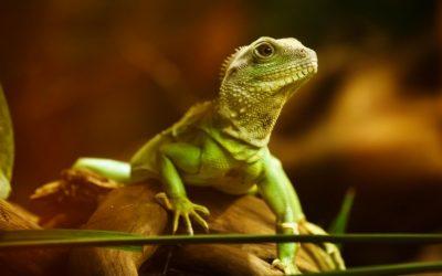 爬虫類を冬場に冬眠させないために出来る温度対策