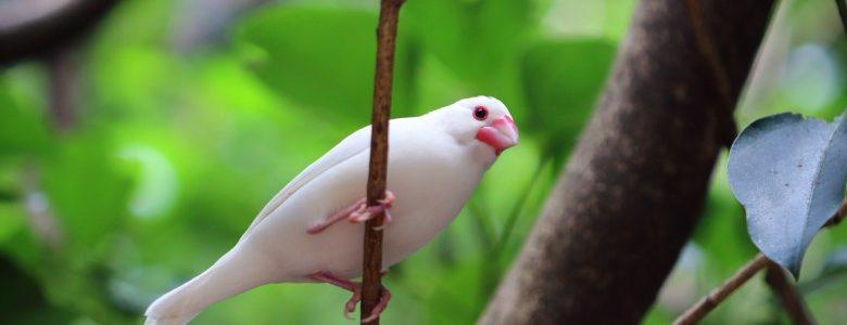 文鳥の飼育で必要な道具。飼育用品を揃えて飼い始めよう