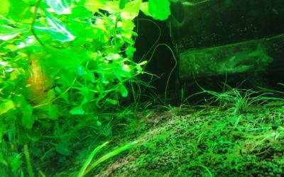 メダカの水槽の立ち上げ方。水槽環境はどんなのが良いの?