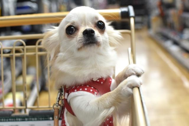 服選びは愛犬と相談して