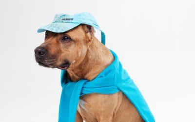 犬の服の選び方 どうやって服を選べばいいの?