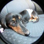 犬を車に乗せるときに気を付けること