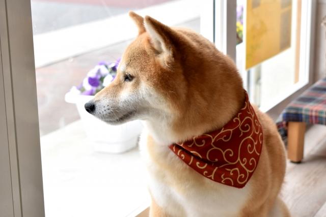 季節ごとの犬の服