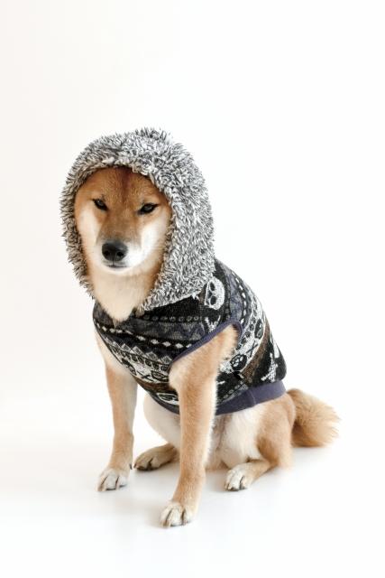 服を着た犬はかわいい