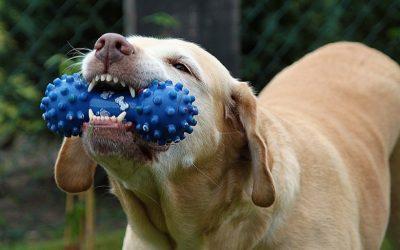 犬の歯磨きの仕方