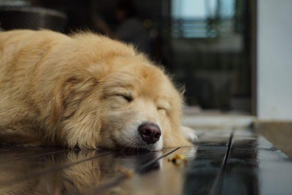 犬の各部位のチェック
