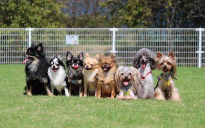 メスの犬の発情期って?基礎知識と対策