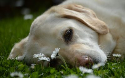 犬が可愛くない!育犬ノイローゼの対策