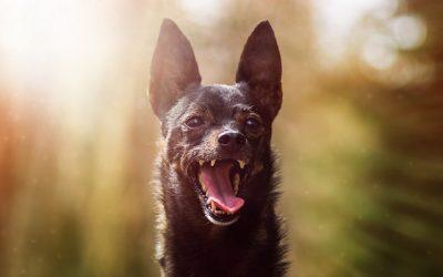 犬の動物病院の選び方 いい動物病院とは?