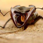 夏休みは昆虫飼育をしよう。おすすめの昆虫は?