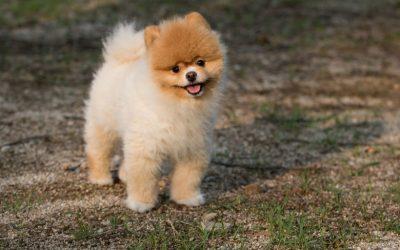 犬のご近所トラブル防止。普段から心がけておくこと
