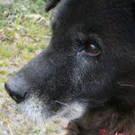 犬が人に怪我をさせたとき。飼い主の義務は?