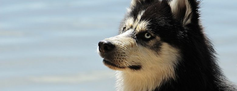 犬が人に怪我をさせたとき。穏便に解決するには