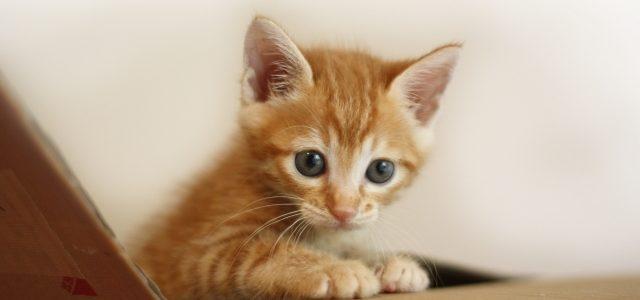 猫の鳴き癖のしつけ。猫はなぜ鳴くの?