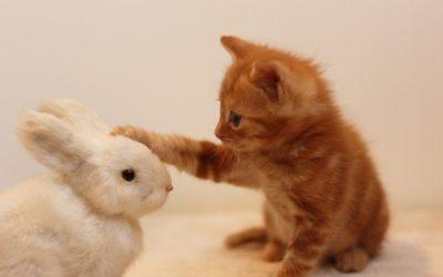 猫の鳴き癖を直したい!猫が鳴く原因別のしつけ