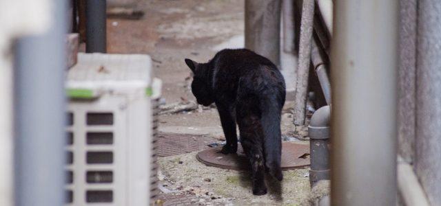 迷い猫の探し方。有効な探し方とは?