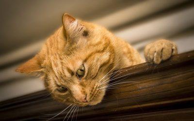 猫の目の病気。毎日チェックしよう!予防法は?