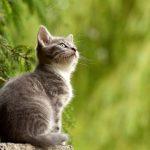 猫のおやつについて。どういう与え方をする?