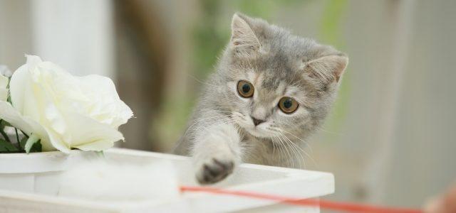 猫のおもちゃ。おもちゃを使った飽きない遊びについて