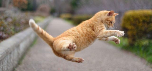 猫との遊び方。一緒に遊ぶときの注意点