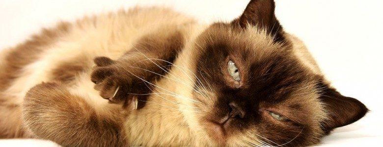 猫に多い消化器の病気。予防法と治療は?