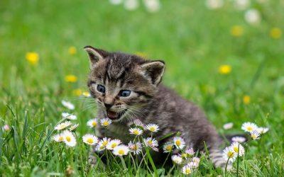 猫の餌の選び方。与えてはいけないキャットフードとは?