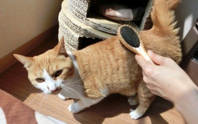 猫のブラッシングをしてあげる効果と意義