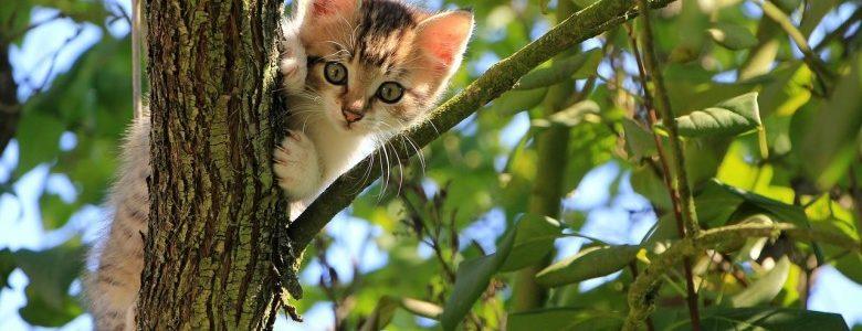 子猫のおやつについて。いつから・何を与えればいいの?
