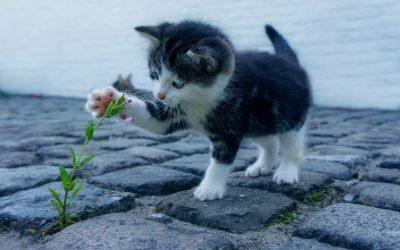 子猫の餌についての基本。いつ何を与えるの?