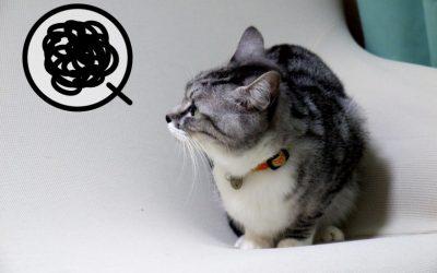 猫に多い耳の病気。予防と治療法は?
