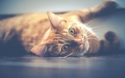 猫に多い感染症。それぞれの症状と予防法について