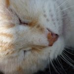 シニア猫の飼い方。日常生活で気を付けてあげるべき5つのポイント
