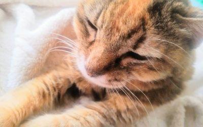 猫の老化防止。シニア期に入る前にしてあげられる5つのこと