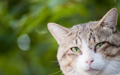 猫の生涯にかかる最低費用は142万円。飼うときは覚悟を持って
