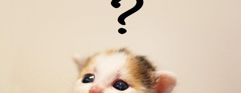 子猫の飼い方についてまとめ。注意すべきポイント5選