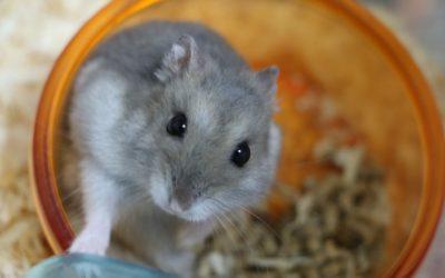 ハムスターの餌について。主食と副食は?与えるときの注意点は?