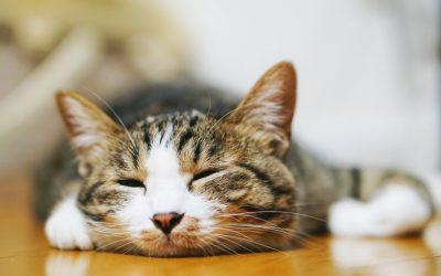 赤ちゃん猫の飼い方。保温の世話について